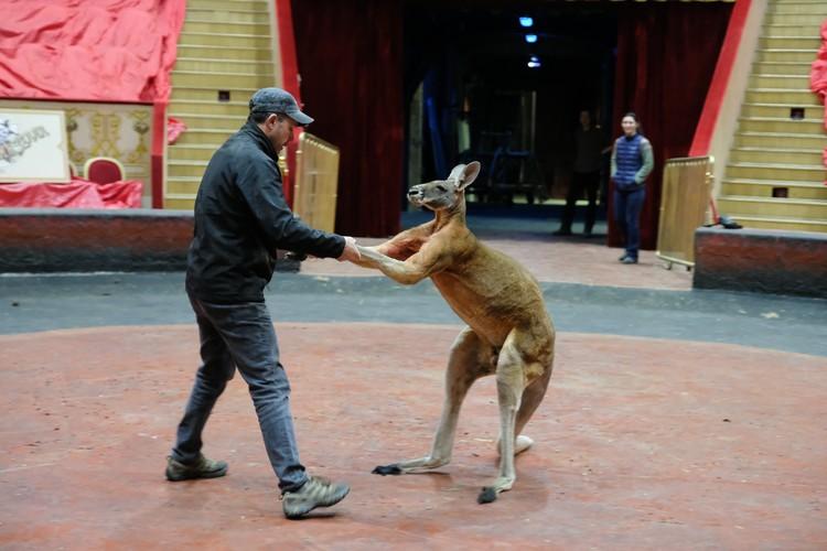 Животные, как и люди, скучают без зрителей и аплодисментов.