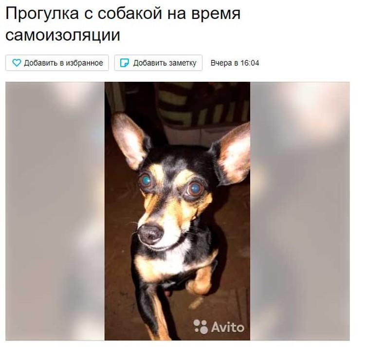 Аренда собак во время карантина.