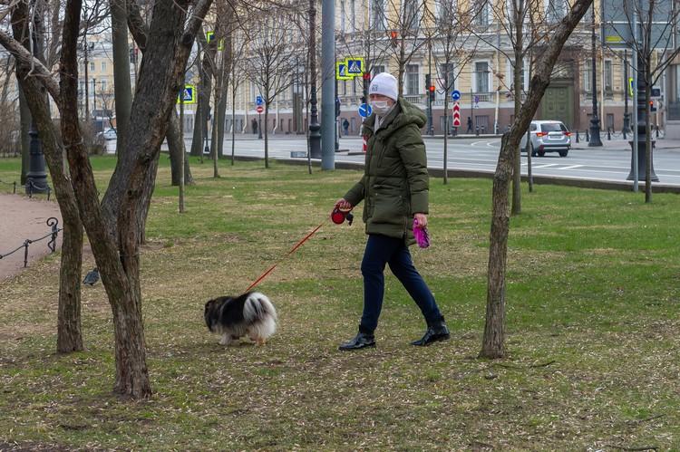 Даме приходится выгуливать собачку в саду