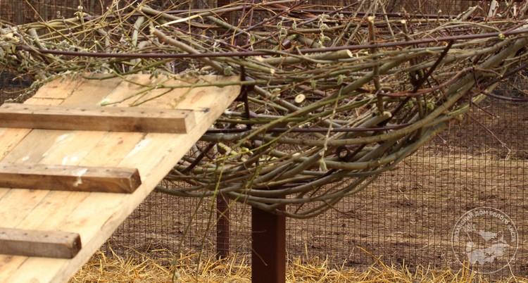 По словам орнитологов, совместное обустройство гнезда для птиц - это все равно что для супругов ремонт квартиры.