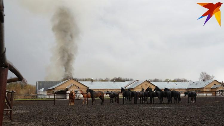 На дым большого пожара тревожно смотрят обитатели Старожиловского конезавода.