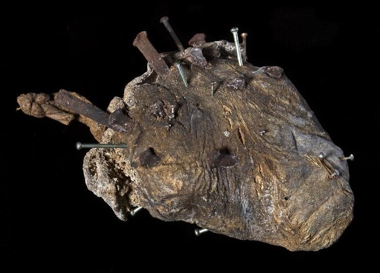Овечье сердце от злых чар. Фото: twitter.com/profdanhicks