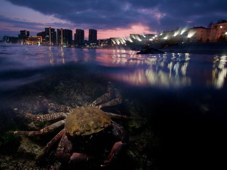 «Земля - общий дом». Фото Егора Никифорова («Подводный мир»)