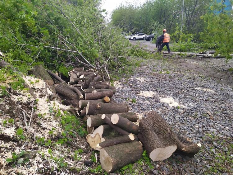 Вырубят порядка 800 деревьев