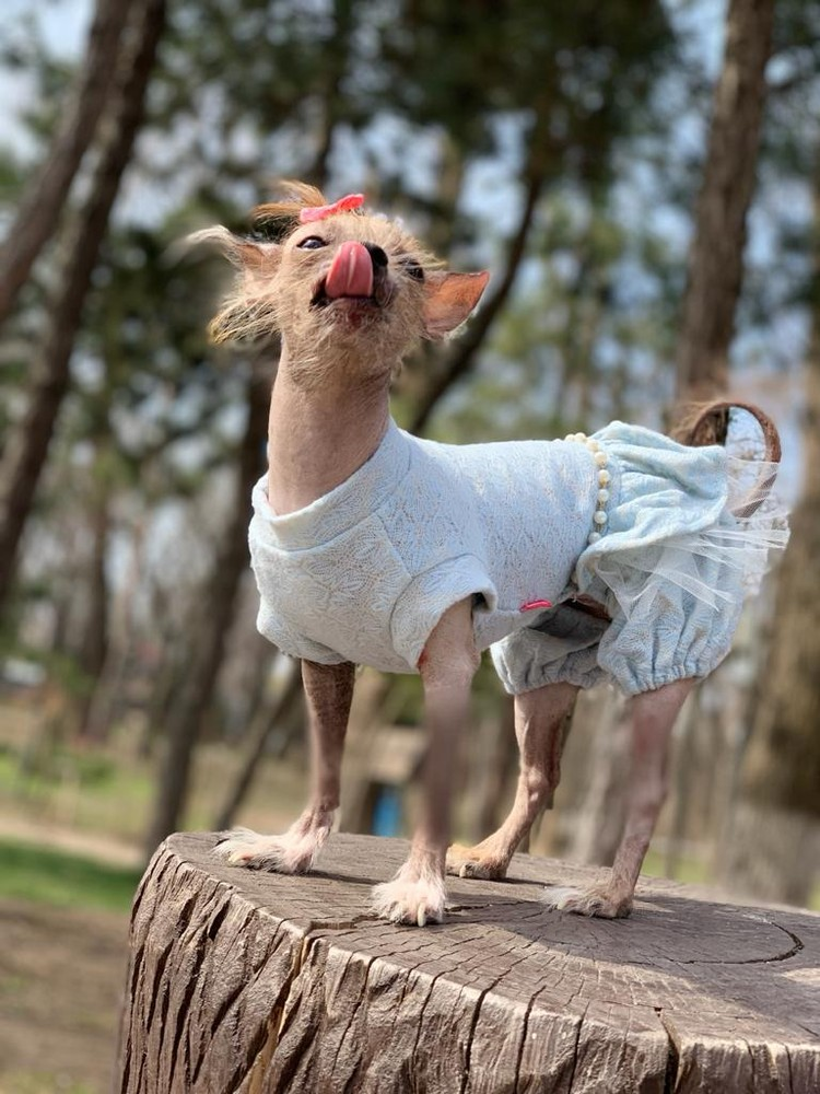 Многие просят сделать фото с Линдой. Фото: страница Вконтакте реабилитационного центра бездомных животных города Шахты «Святобор».