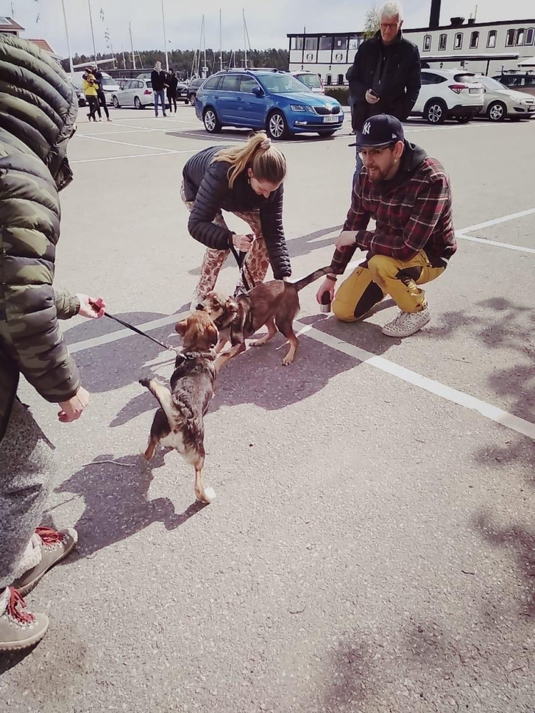 """После голодной жизни на улице - в европейскую семью. Трогательные кадры. Фото: группа """"Помощь Бучу и бездомным животным"""""""