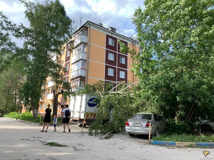 Деревья валились на авто.