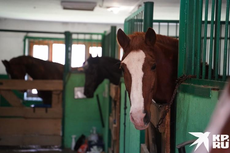 Все лошади здесь спокойные и дружелюбные