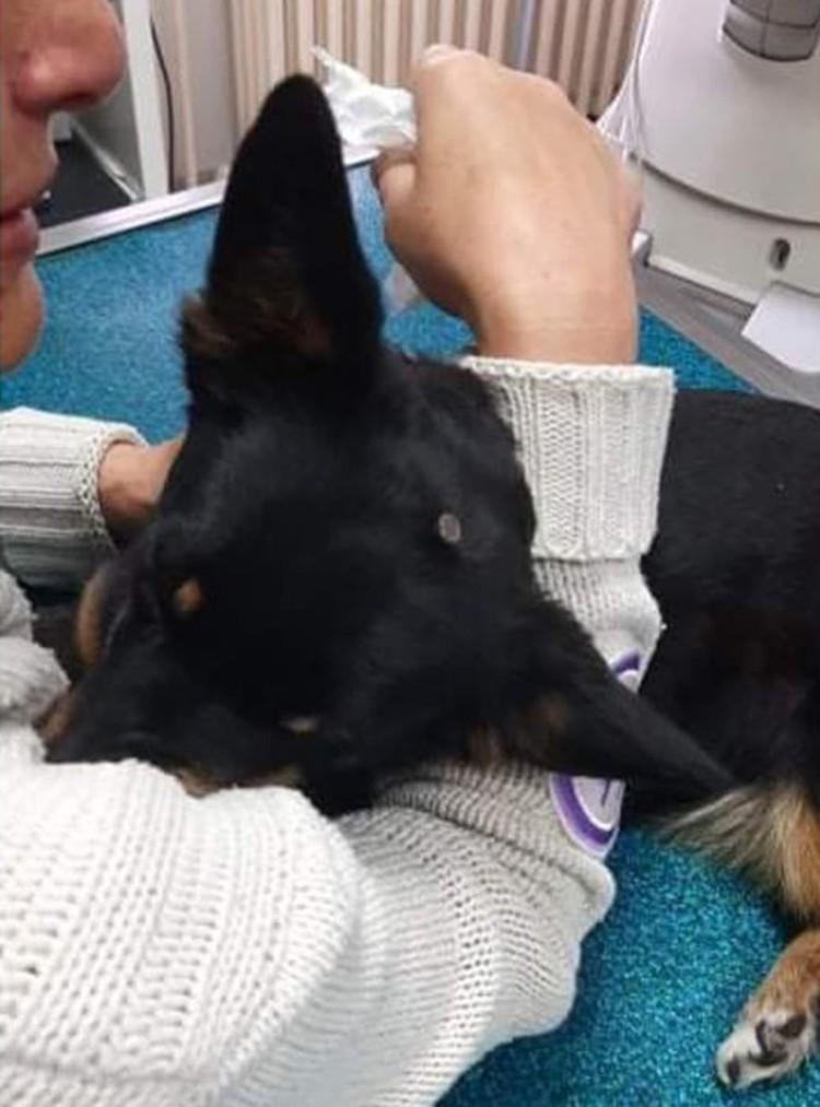 Собака серьезно пострадала от рук ребенка-изверга. Фото: Ассоциация защиты животных Нови Сад-СПАНС (фейсбук)