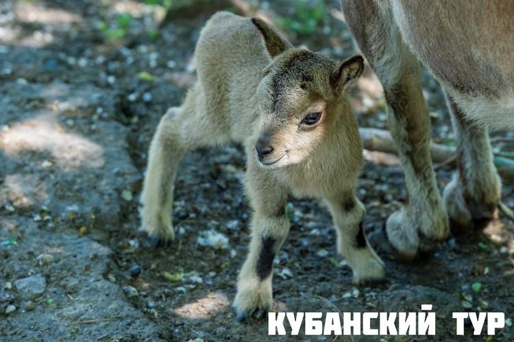 Фото: ростовский зоопарк.