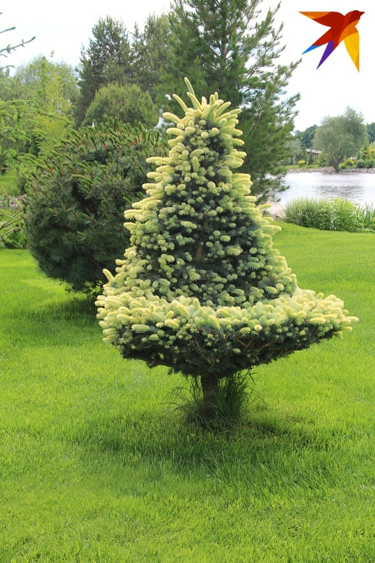 Это будет елка-трон