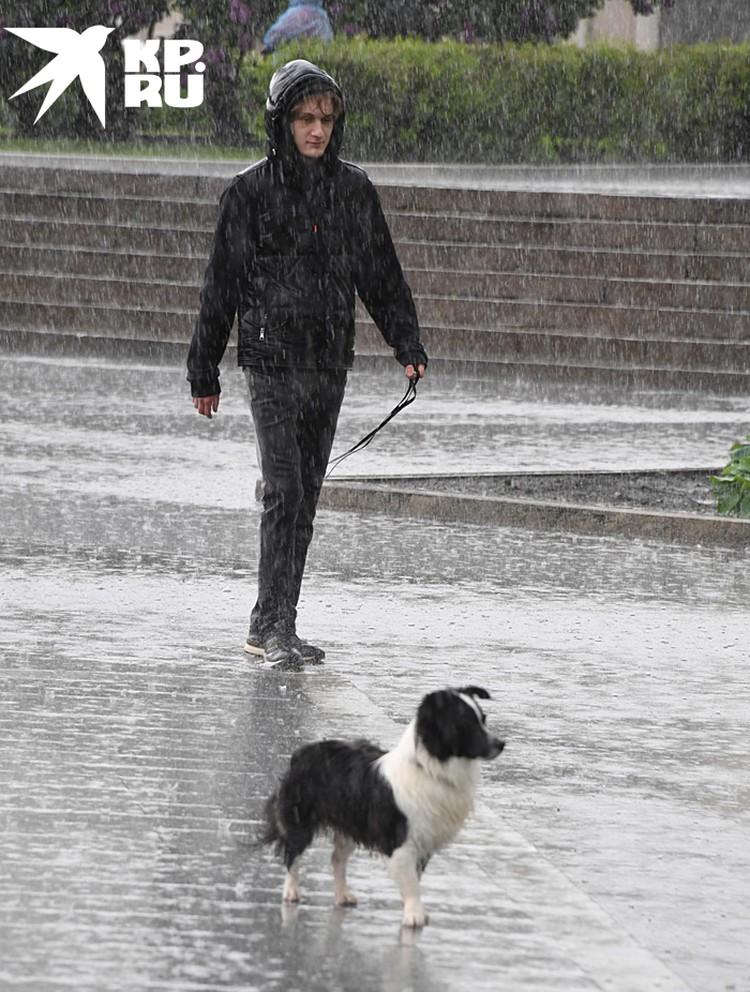 Какая бы ни была погода, а собаку нужно выгулять
