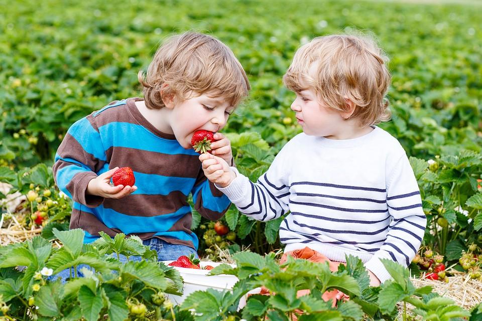 Много инозитола содержат цитрусовые, клубника, изюм. Фото: Shutterstock