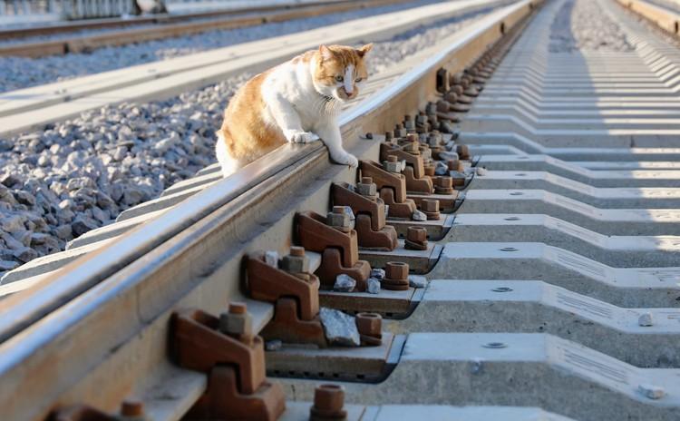 Главный мостостроитель. Фото: кот Моста/VK