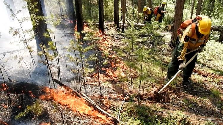 В Югре в связи с пожарами был введен режим ЧС. Фото ФБУ «Авиалесоохрана»