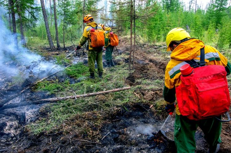 Земли лесного фонда составляют 92% территории Югры.Фото ФБУ «Авиалесоохрана»
