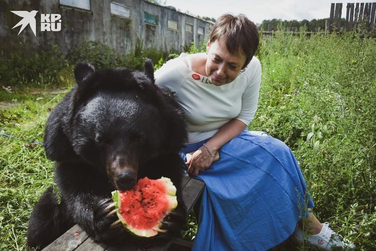 Медведь спокойно подпускает к себе чужих людей во время еды.