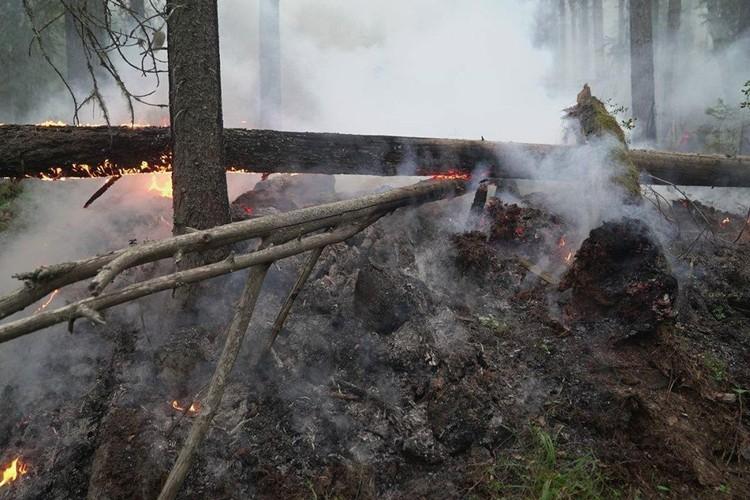 Огонь сейчас распространяется не только по низу, но и по кронам деревьев. Фото: пресс-служба заповедника «Денежкин Камень»