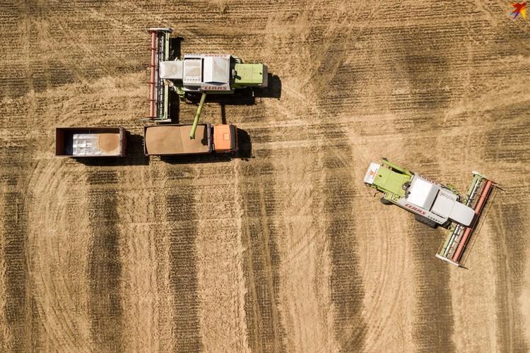 Уборка пшеницы на Кубани