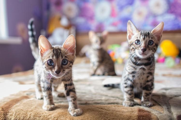 Котятам сейчас подыскивают хозяев.