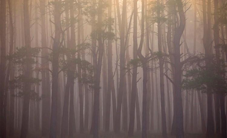 Номинация «Пейзаж». Осеннее солнце. Автор: Максим Портнов Место съемки: Липецкая область, Липецкий район