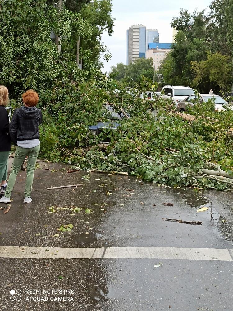 На Урицкого деревья завалили машину