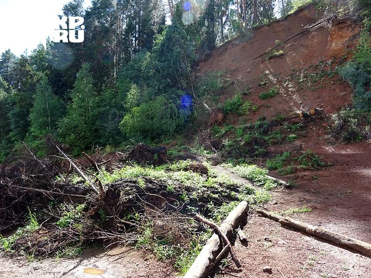 Так зарастает уникальное местонахождение парейазавров из-за упавших деревьев