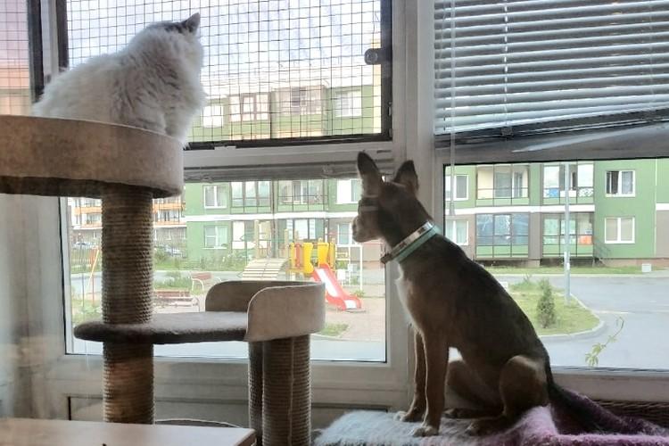 А так Победа ждала вместе с подружкой, когда же откроют границы, чтобы добраться в новый дом. Фото: yupianimals