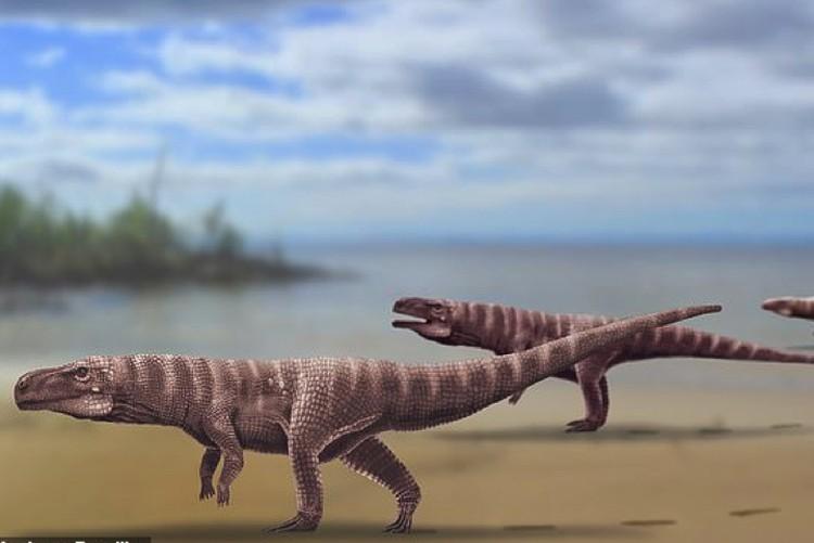 Так, по мнению ученых, выглядел двуногий крокодил.
