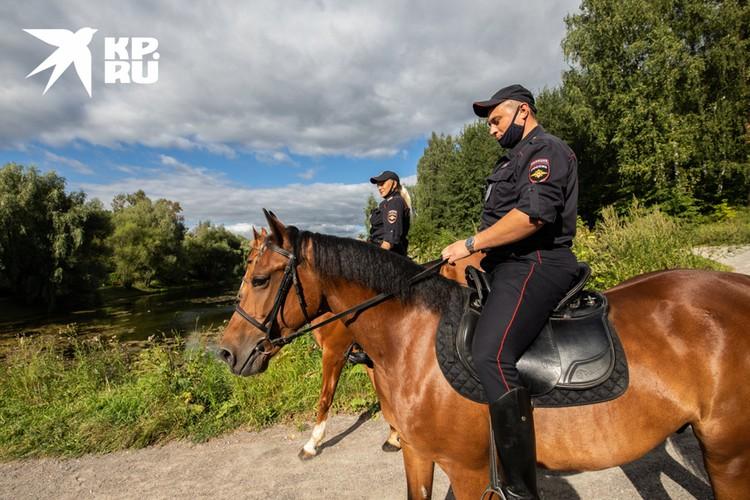 За рабочий день конная пара проходит около 20 км.