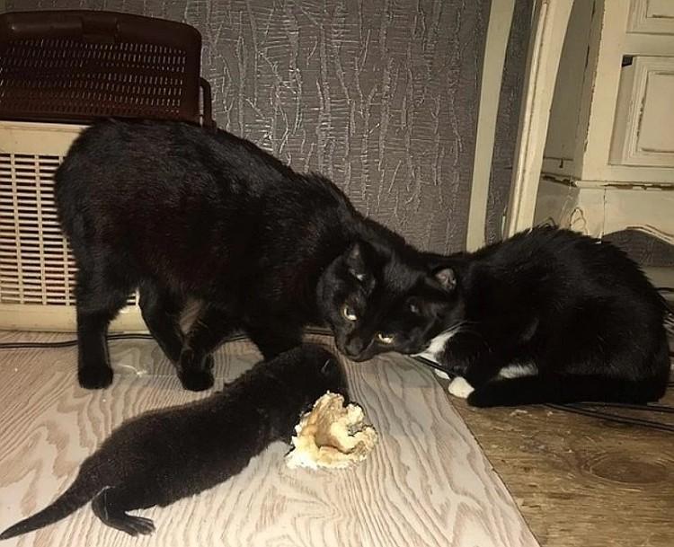 Малыш Эллиот и кошки. Сейчас игры с ними превратились в схватки охотника с жертвами. Фото: Иркутская зоогалерея