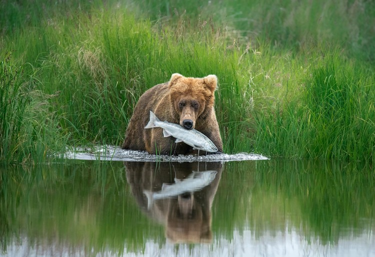 Hannah Vijayan, Canada / Wildlife Photographer of the Year