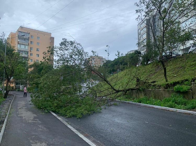 Ураганный ветер повалил дерево на Монтажной. Фото: Юлиана Виноградова.