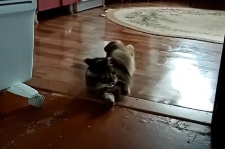 Любой шаг для кошки был неудачей — она сразу заваливалась на бок. Фото: стоп-кадр.
