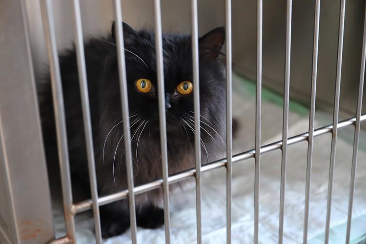 Эта очаровательная кошка ждет операции. После процедуры она останется в дневном стационаре, а вечером хозяева заберут ее домой