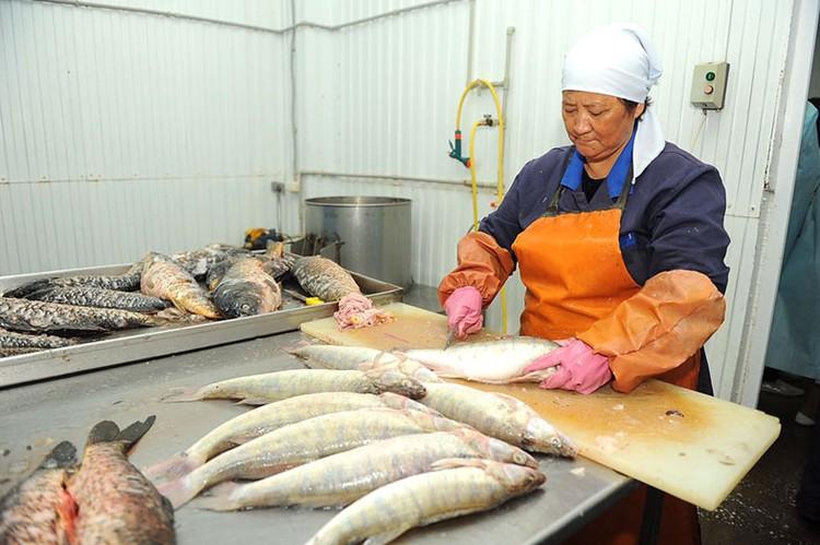 Предпринимателей познакомят с опытом рыболовства и рыбоводства.