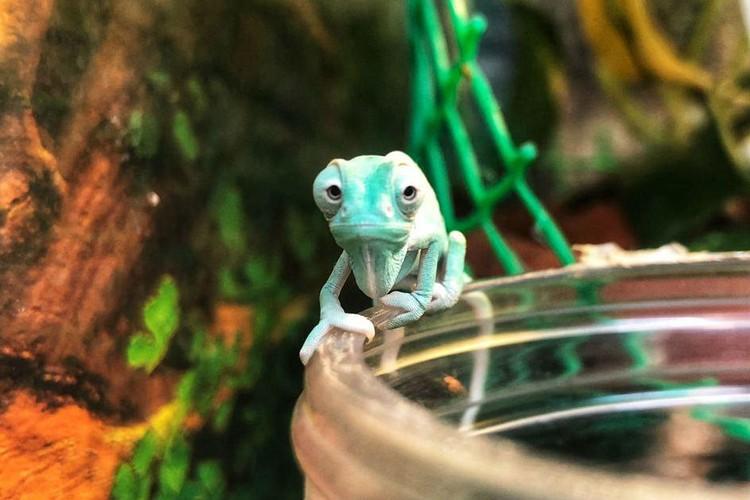 Пока они совсем маленькие... Фото: Челябинский зоопарк