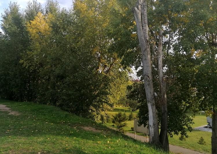 На территории встречаются засохшие деревья, которые никто не убирает.