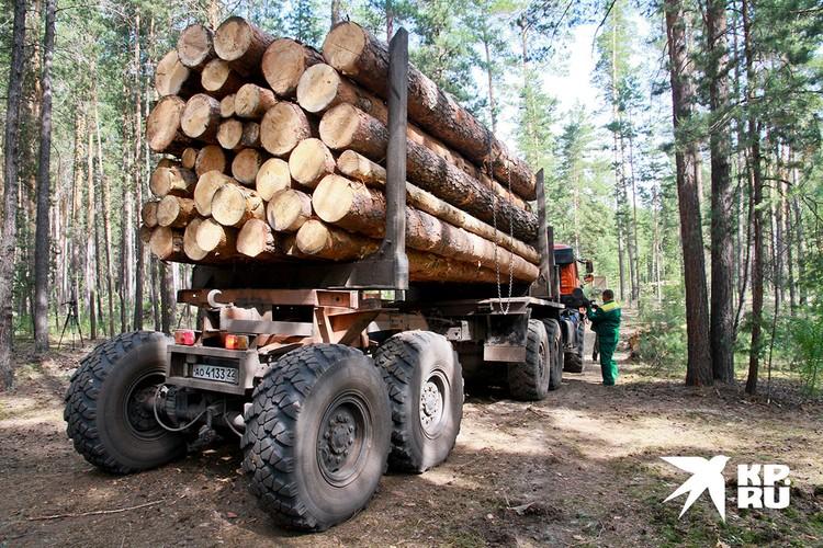 Лесной русский бизнес – в современном исполнении – это доразграбление и так нищей русской глубинки