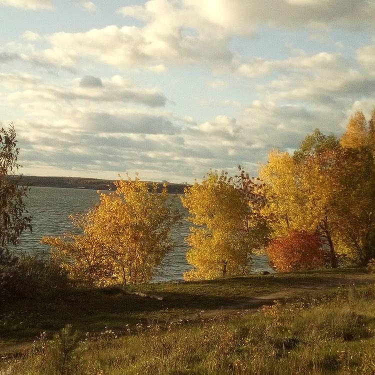 Деревья возле Шершневского водохранилища создают атмосферу меланхолии. Фото: Instagram / taf_summers