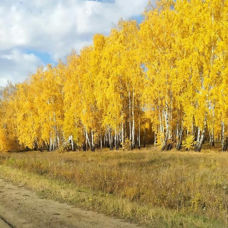 Скоро деревья полностью сбросят свою листву. Фото: Instagram / cake_asahobby