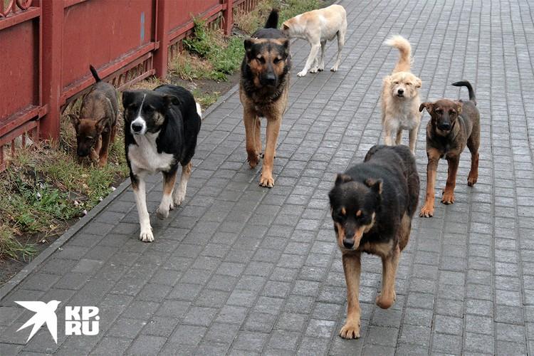Стая бездомных собак на городской улице.
