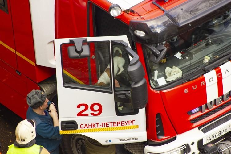 Песик быстро оклемался и уже успел почувствовать себя хозяином пожарной машины. Фото: vk.com/spb_today