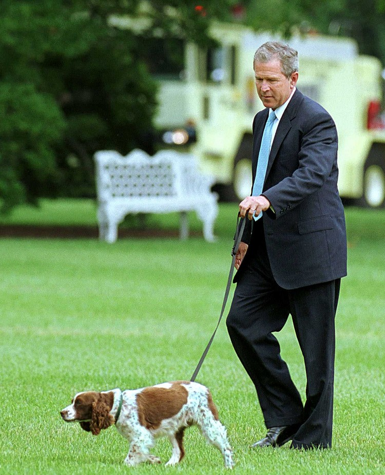 Спотти – спаниэль Джорджа Буша