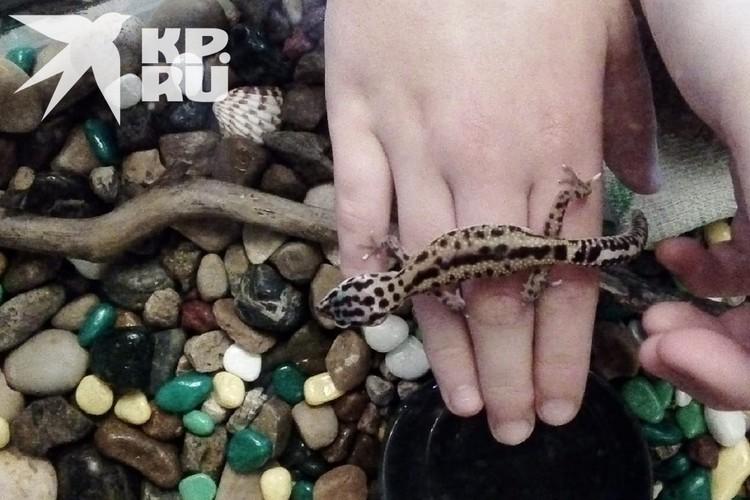 Малыш привык к человеческим рукам. Фото: предоставлено героиней публикации.