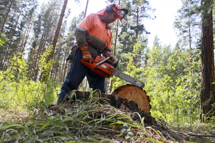 В департаменте лесного хозяйства заявили, что все под контролем.