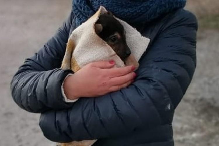 В Липецке между гаражами застрял щенок