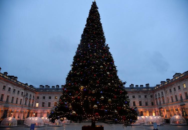 Los residentes británicos también reciben un árbol de Navidad gratis.  La principal belleza siempre está instalada en Trafalgar Square de Londres.