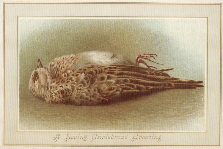 Один из самых популярных образов на викторианских рождественских открытках - мертвые птички.