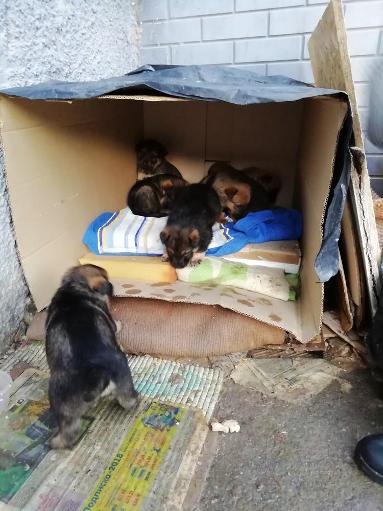 """Бездомной собаке даже соорудили картонный домик. Фото: """"Злой крымчанин"""""""
